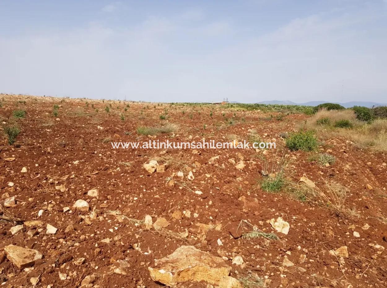 28 Acres For Sale In Didim, Farmland, Farm Land