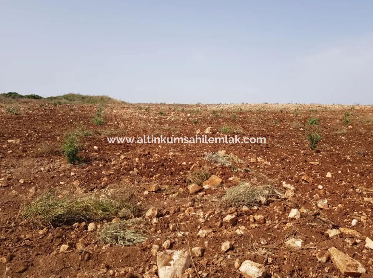 Didim'De Satılık 28 Dönüm Tarla, Çiftlik Arazisi