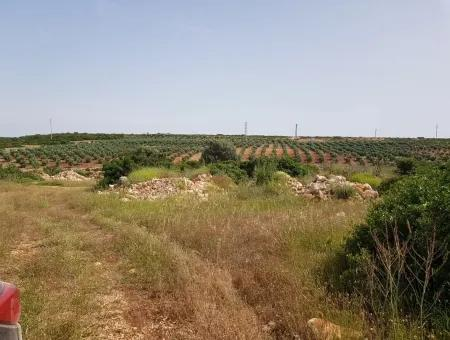 Didimde Satılık 28 Dönüm Tarla, Çiftlik Arazisi